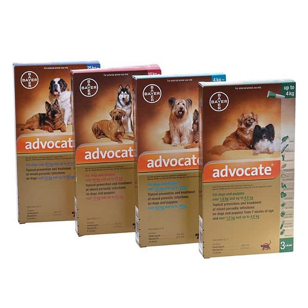 Advocate for dogs