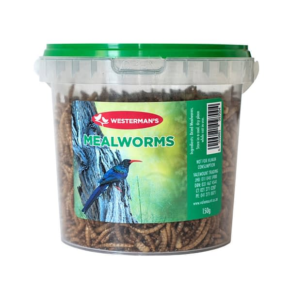 Westerman's Mealworms