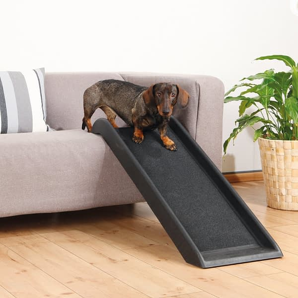 Small dog ramp